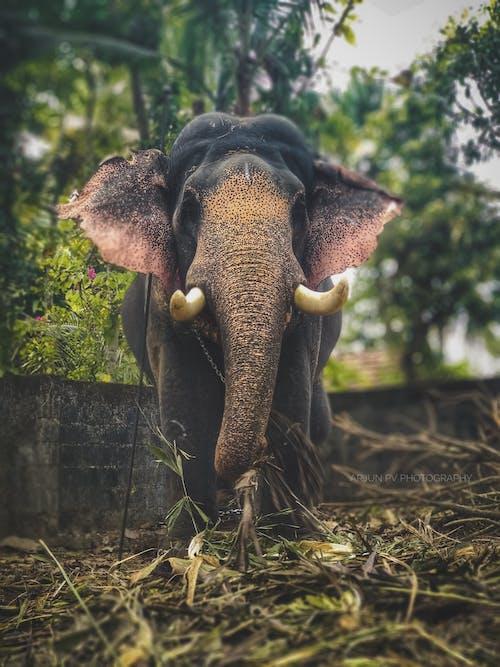 Gratis lagerfoto af elefant, Festival, grøn, indiens festival