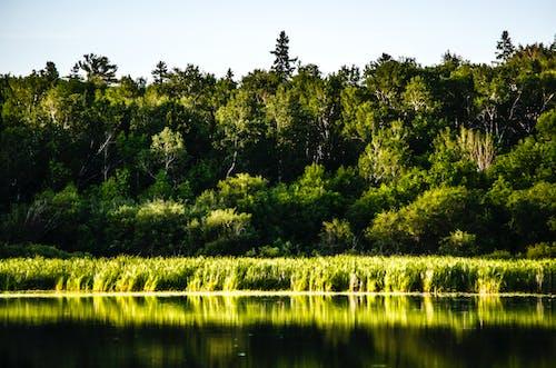 Imagine de stoc gratuită din codru, natură, Pexels
