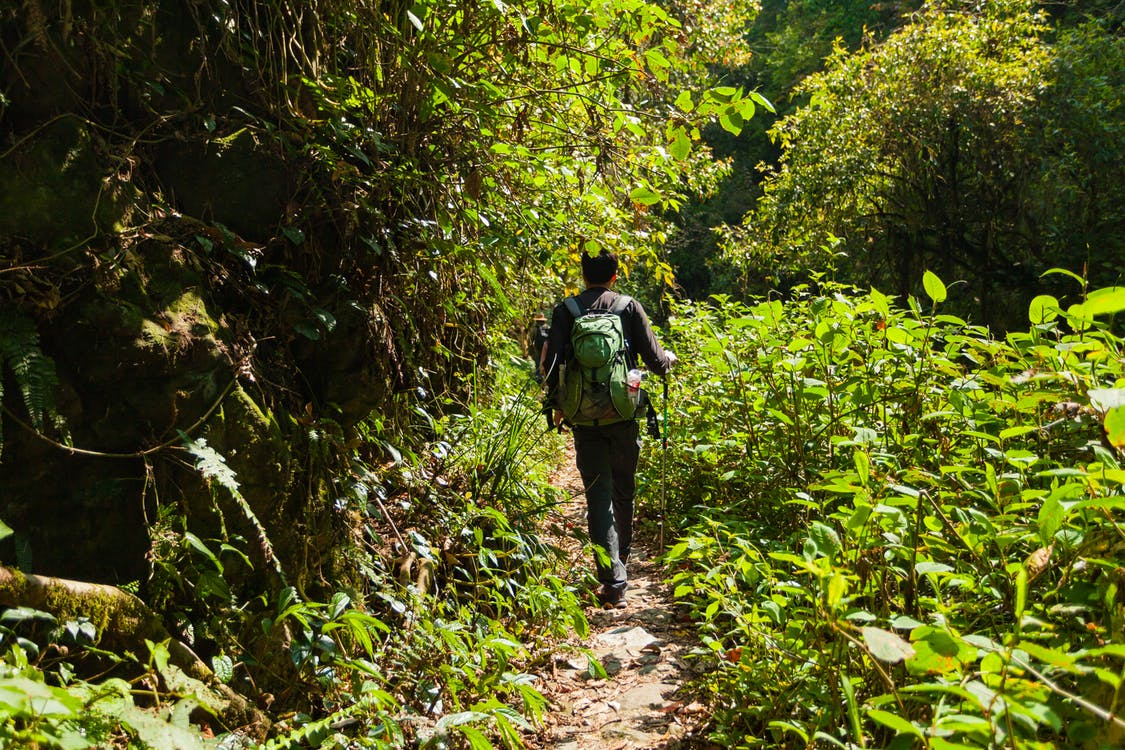 Person Carrying Green Backpack in Forest