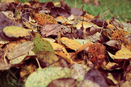 Nature wallpaper of nature, dry, blur, leaves