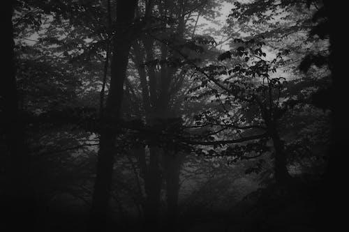 Imagine de stoc gratuită din alb-negru, arbori, călătorie, călătorie în spațiu