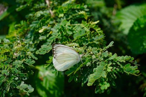 Fotobanka sbezplatnými fotkami na tému biela, motýľ