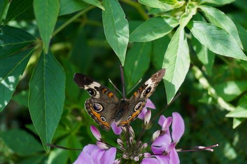 Fotobanka sbezplatnými fotkami na tému motýľ
