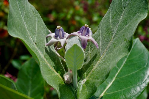 Photos gratuites de fleur, fleur violette