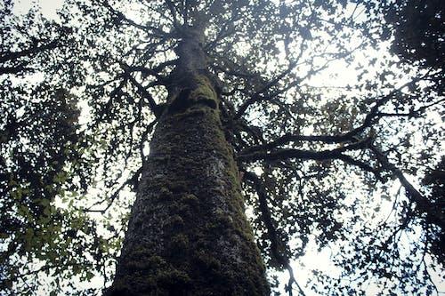 多雲的, 樹枝, 蘋果樹 的 免费素材照片