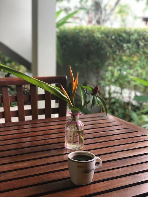 Gratis stockfoto met Azië, bloem, buiten, koffie