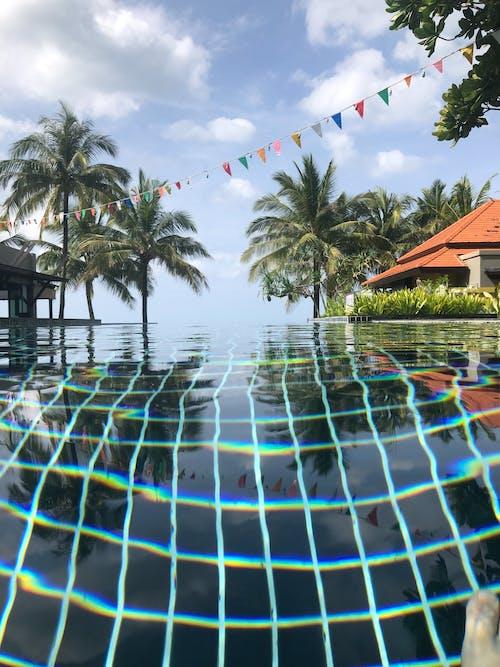 Gratis stockfoto met Azië, palmboom, zwembad