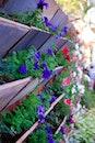flowers, flower wallpaper, flower garden