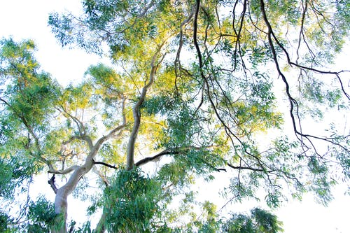 Imagine de stoc gratuită din arbore, crengi, fotografie cu unghi mic, natură