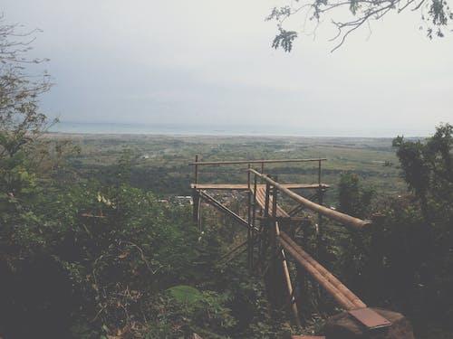 Free stock photo of bridge, forest, gorge, horizon
