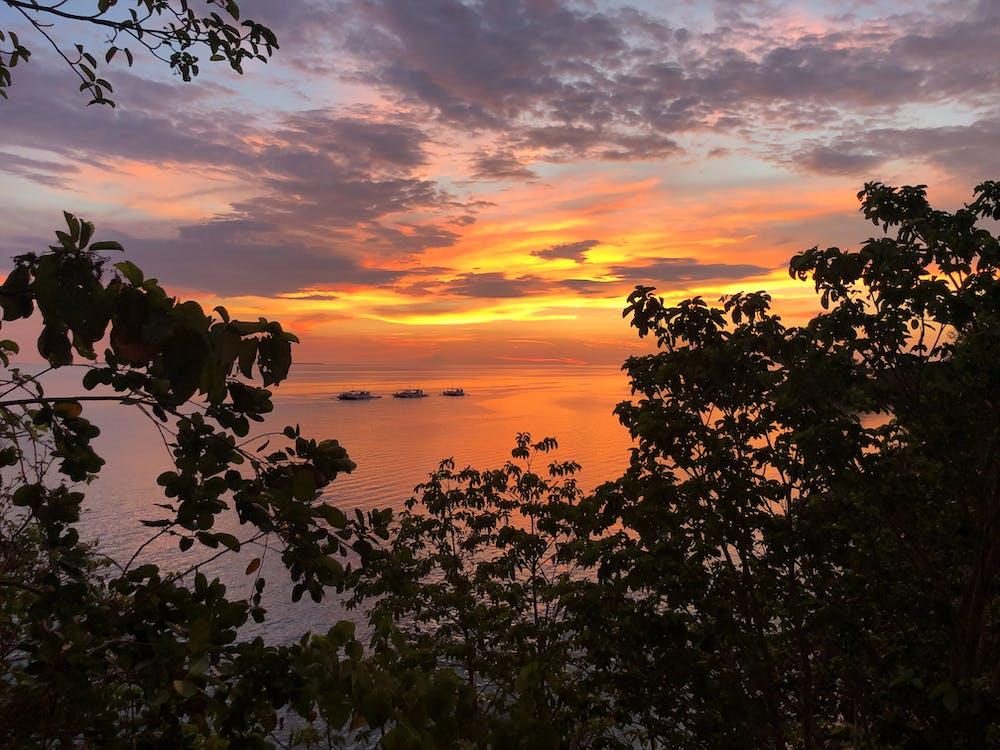 восход, дерево, закат