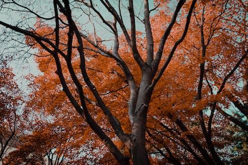 Free stock photo of autumn, fall, fall colors, fall foliage