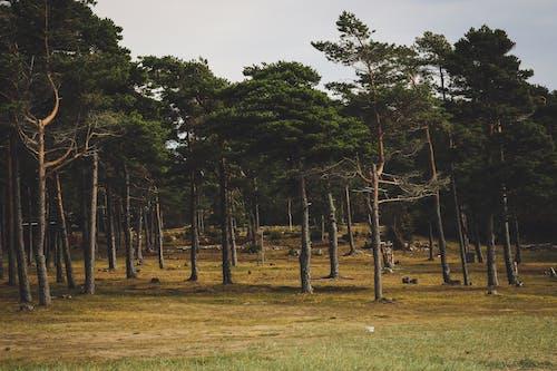 公園, 天性, 戶外, 旅行 的 免費圖庫相片