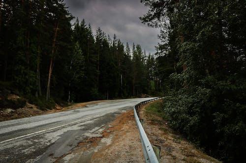 Foto d'estoc gratuïta de bosc, Escandinàvia, fotos d'escandinavia, fotos de noruega