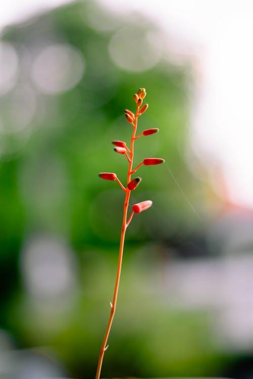 Fotobanka sbezplatnými fotkami na tému kvet, kvetinový aranžmán, prírodný