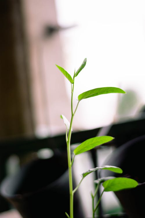 Fotobanka sbezplatnými fotkami na tému príroda, prírodný, zelený list