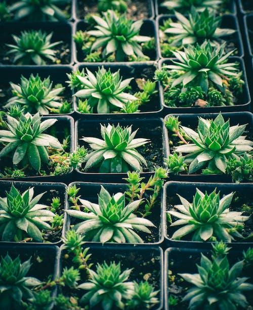 Fotobanka sbezplatnými fotkami na tému črepníkové rastliny, flóra, zátišie, zelené rastliny