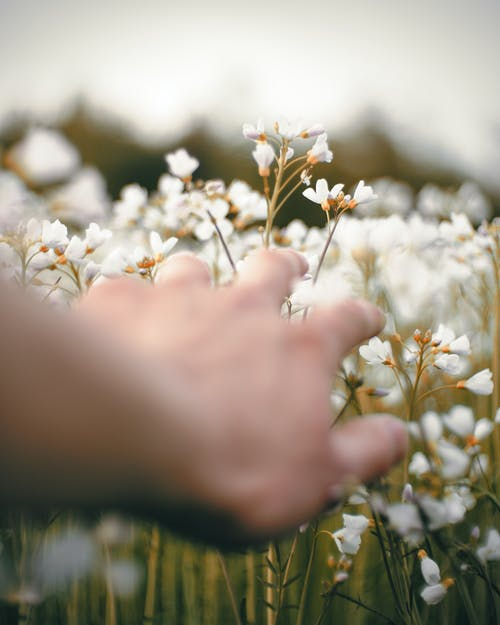 Photo Of Person Holding White Flowers