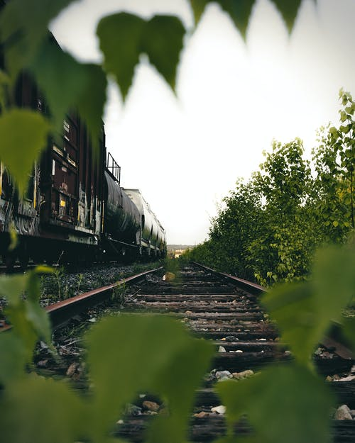 Photo of Brown Train Railways Besides Green Plants