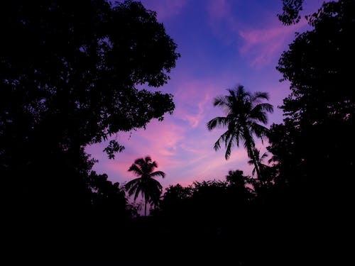 Základová fotografie zdarma na téma atmosférický večer, dramatická obloha, modrá obloha, noční obloha