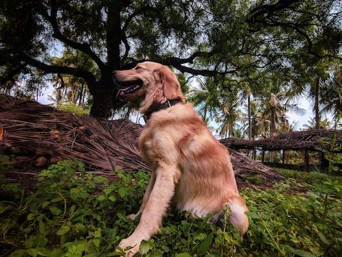 Fotobanka sbezplatnými fotkami na tému 4k tapety, Adobe Photoshop, domáce zviera, domáce zvieratá