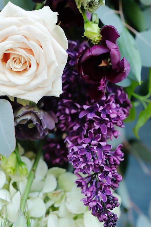 Ảnh lưu trữ miễn phí về hoa màu tím và trắng