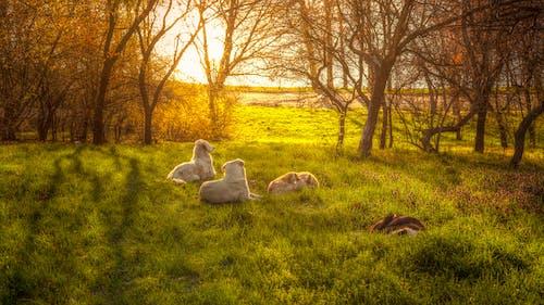 Gratis stockfoto met beesten, bomen, buitenshuis, dageraad