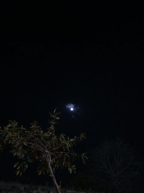 Základová fotografie zdarma na téma měsíc, mrak, obloha, strom