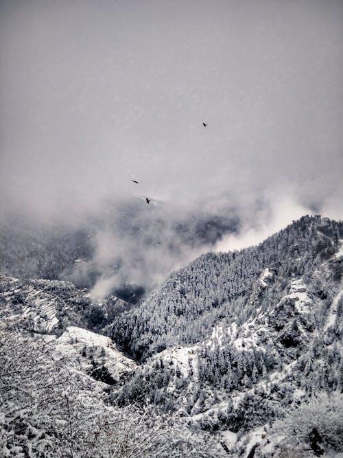 Foto d'estoc gratuïta de boira, cobert de neu, constipat, gebre