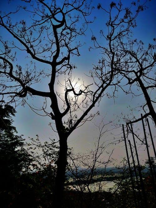#하늘, 맑은 하늘, 벌거 벗은 나무, 석양의 무료 스톡 사진
