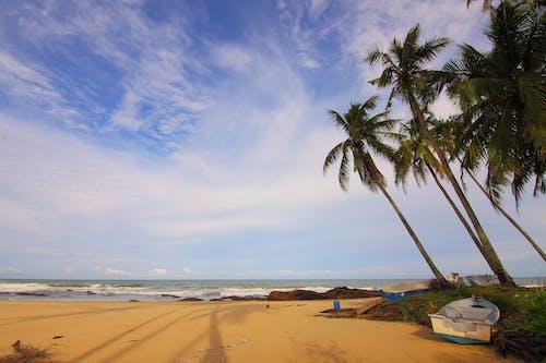 Photos gratuites de arbres, bateau, bord de mer, cailloux