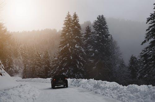Gratis lagerfoto af bil, blade, dis, forkølelse