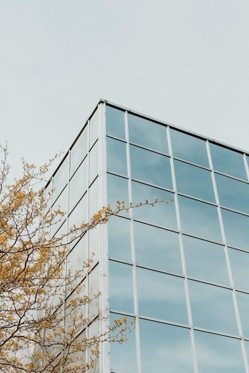 bầu trời, các cửa sổ, cành cây