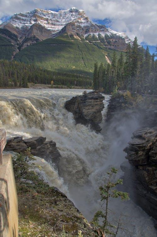 Gratis lagerfoto af Alberta, bjerg, dagslys, dagtimer