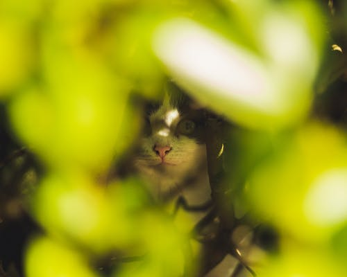 Selective Focus Photo of Cats Face Behind Green Leaves