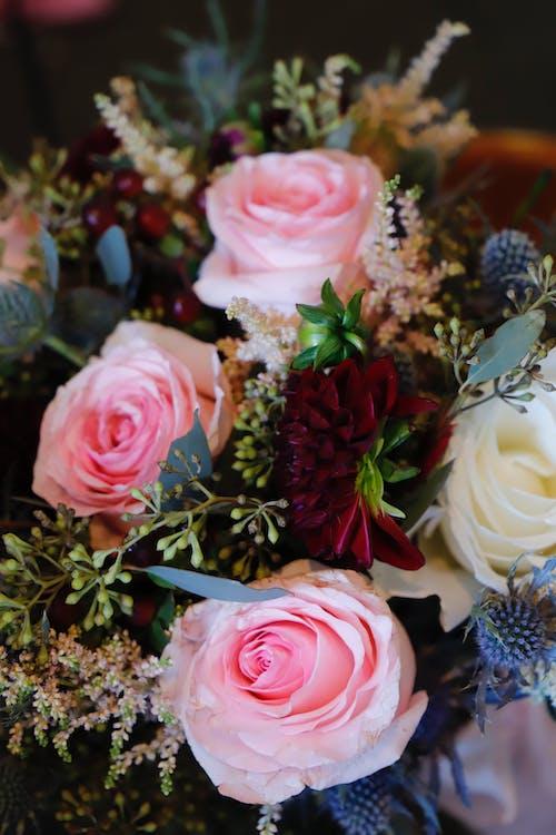 Ảnh lưu trữ miễn phí về Hoa cô dâu