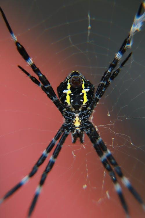 Ảnh lưu trữ miễn phí về mạng nhện, nhện