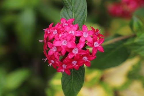 Ảnh lưu trữ miễn phí về hoa hawaii, những bông hoa màu hồng, những bông hoa đẹp