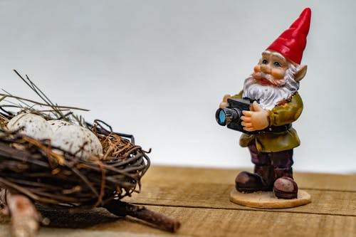 Free stock photo of bird nest, gnome, gnome photography