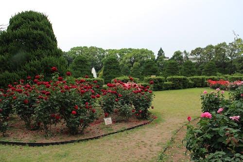 Photos gratuites de asie, botanique, centrale, date