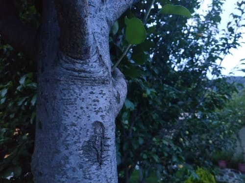 Ingyenes stockfotó fa, felhő, természet témában