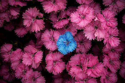 Gratis arkivbilde med 4k-bakgrunnsbilde, årstid, blå, blomster