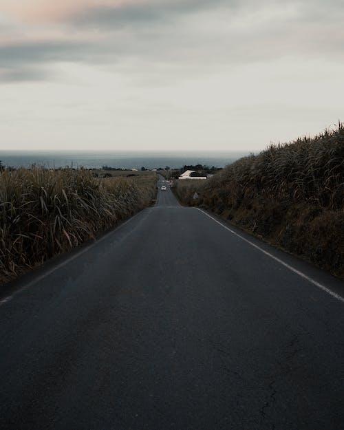 Fotobanka sbezplatnými fotkami na tému cestovať, hory, konštatovanie, leto