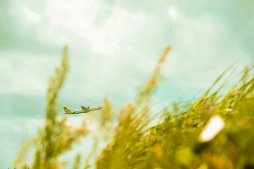 Airplane Flying Above Green Grasses