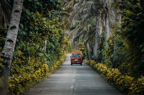 Photos gratuites de arbres, automobile, bois, centrales