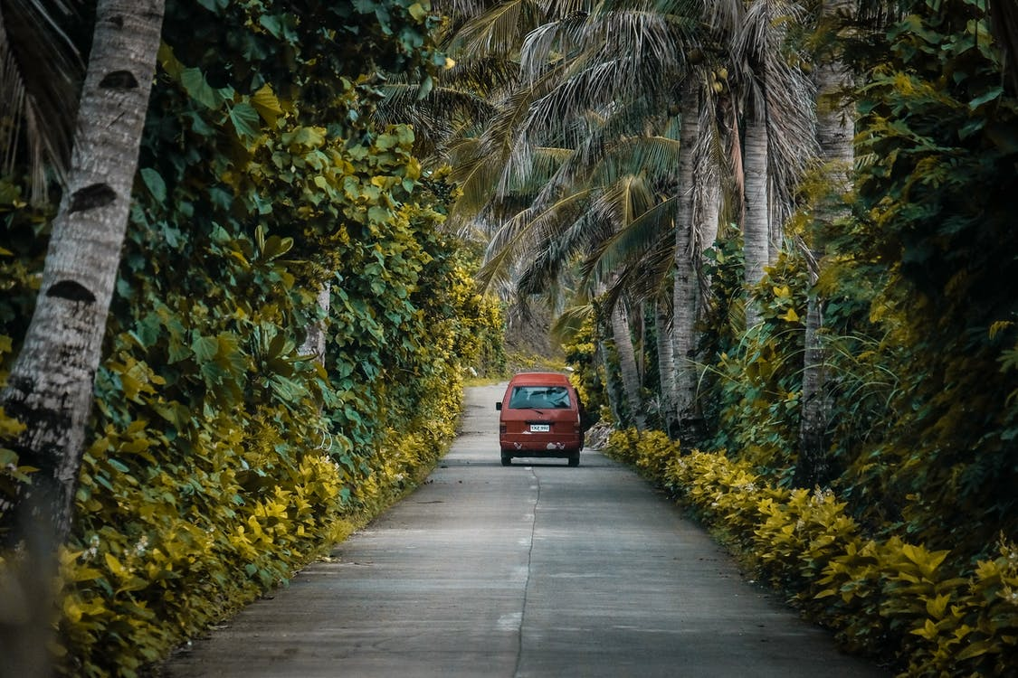 Photo of Road Surrounded By Trees
