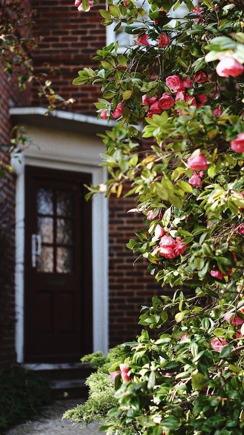 Gratis stockfoto met bloem, fabriek, flora, tuin