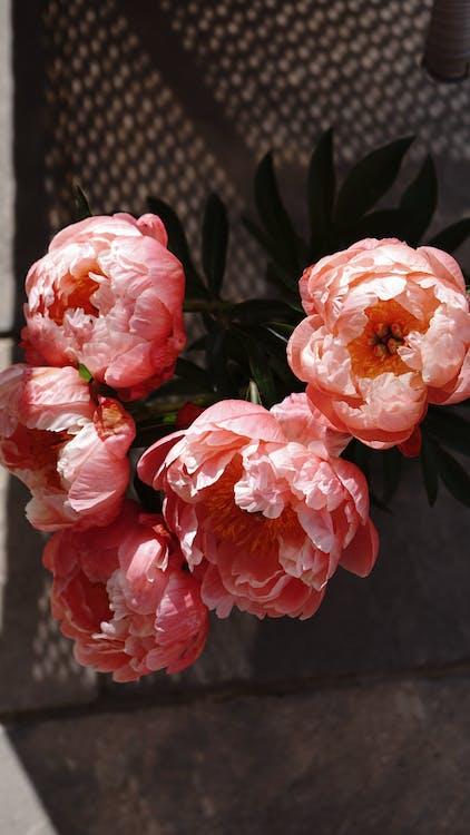 Photo of Pink Petaled Peonies