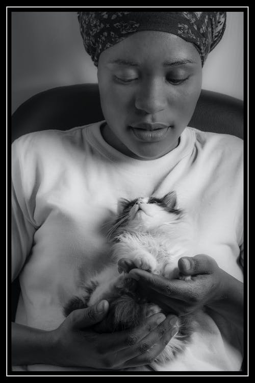 動物愛好者, 女士, 小貓 的 免費圖庫相片