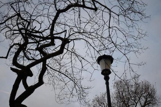 Free stock photo of dark, winter, silhouette, tree